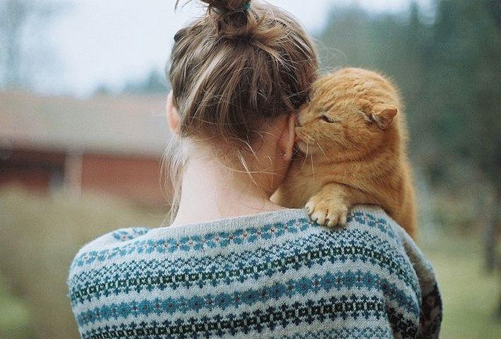 За что девушки любят котов
