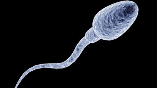 spermatozoid-620x349_result