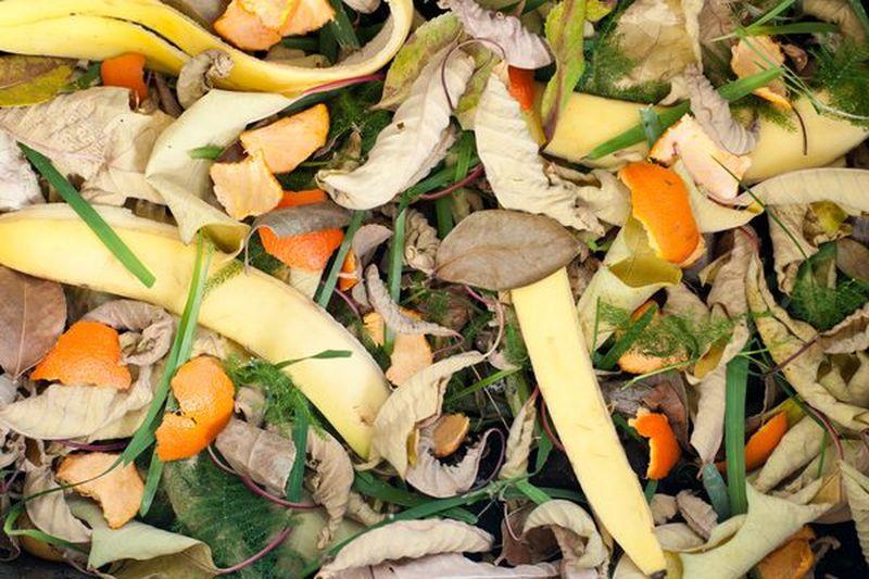 Банановая кожура для отпугивания садовой тли