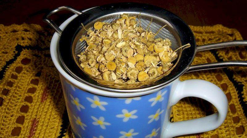 Ромашка как лучшее лекарство наших бабушек: ромашковый чай и его 15 целебных свойств