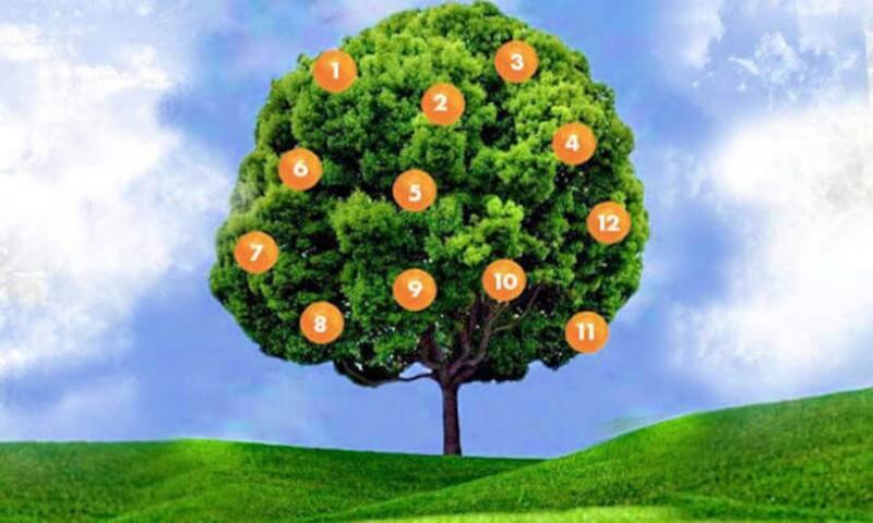 Достаточно выбрать один фрукт и дерево желаний расскажет, сбудется ли ваша мечта