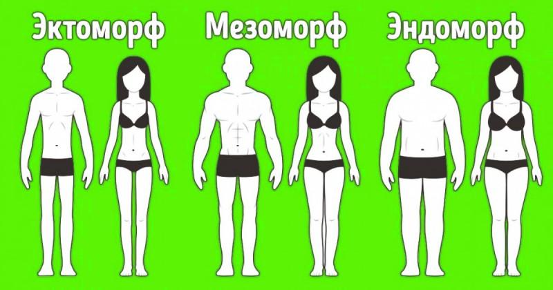 Эктоморфы, мезоморфы и эндоморфы худеют по-разному: правила похудения по типу фигуры