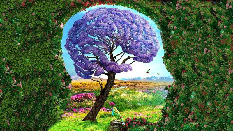 Знания или стремление к идеалу: что увидели первым, то и руководит вашей жизнью