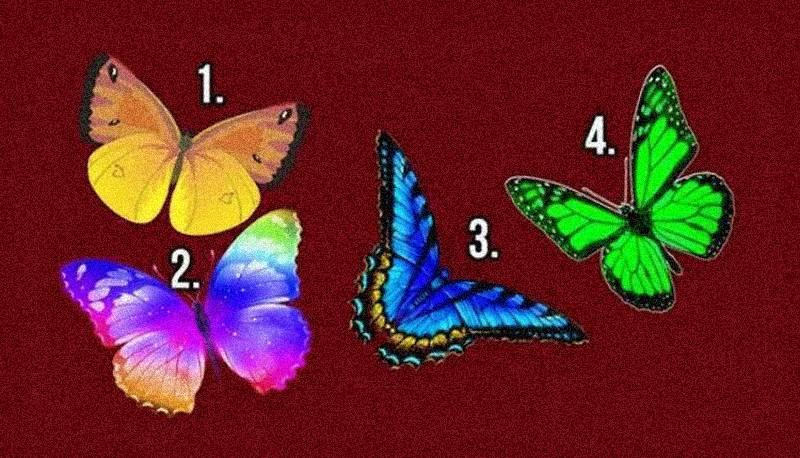 Бабочка желаний знает о вас все: пройдите психологический тест на личность и узнайте сами