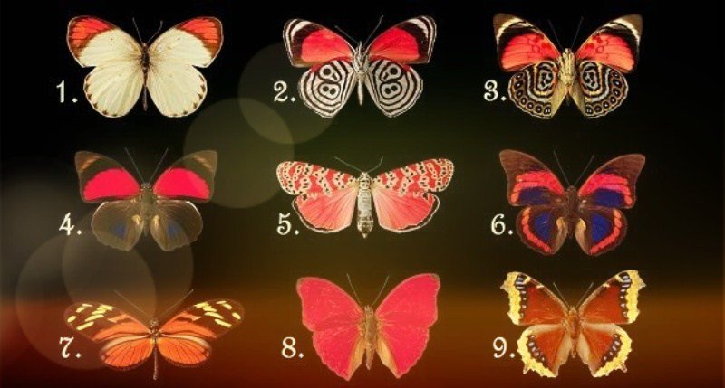 Выберите бабочку и узнаете, что преобладает в вашем характере