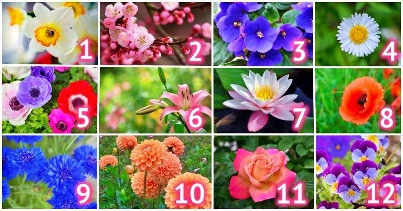 Узнайте свой цветок и получите характеристику по месяцу рождения